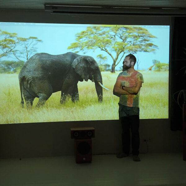 Projekcija slona v pisarni na Smart barvo za steno projektor.